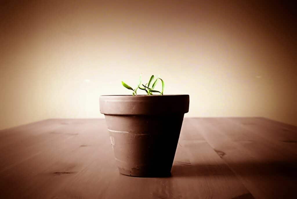 Como fazer um bom gerenciamento de leads nas empresas?